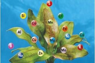 Ознаки нестачі мікроелементів у рослин