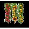 Саджанці фруктових дерев