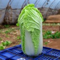 Насіння капусти Гранат, 0.5 г
