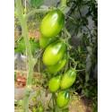 Насіння помідорів високорослих Смарагдова груша 0.1 г