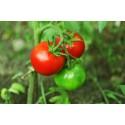 Насіння помідорів Річі F1, 0.05 г