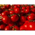 Насіння помідорів низькорослих Солероссо F1 100 шт