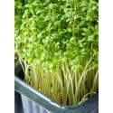 Насіння мікрозелені Крес-салат, 10 г